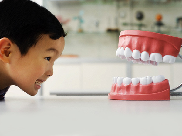 Schoolboy Facing Model of Human Mouth